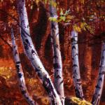 Detail Image, close up of the trees and leaves - art by Geoff Taylor