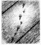 mouse footsteps on dusty floorboards - art by Geoff Taylor
